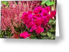 Cyclamen Flower Greeting Card