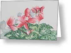 Cyclamen Greeting Card
