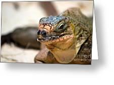Cyclura Cychlura Figginsi Iguana Endangered Greeting Card