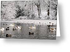 Cygnets In Winter Greeting Card