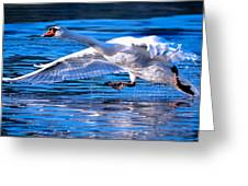 Cygnus Streak Greeting Card