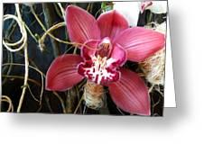 Cymbidium Flower Greeting Card