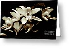Cymbidium Orchids Greeting Card