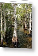 Cypres Swamp-1 Greeting Card