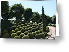 Cypress And Boxwood Garden Greeting Card