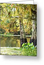 Cypress And Moss Greeting Card