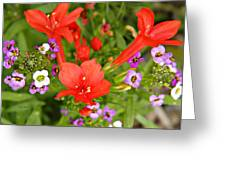 Cypress And Sweet Alyssum Greeting Card