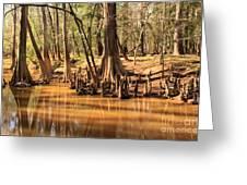 Cypress Arch Greeting Card
