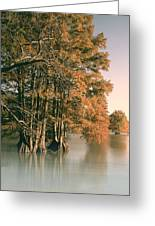 Cypress Autumn  Greeting Card
