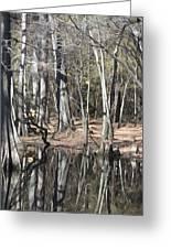 Cypress Bog Greeting Card