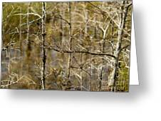 Cypress Branches Greeting Card