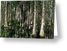 Cypress Dome Interior. Greeting Card