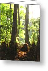 Cypress Forest Greeting Card