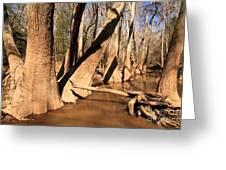 Cypress Hallway Greeting Card