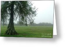 Cypress In The Mist Greeting Card