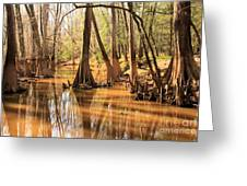 Cypress In The Swamp Greeting Card