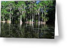 Cypress On Rainbow Greeting Card by Bob Jackson