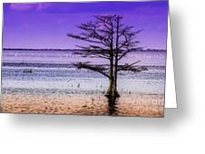 Cypress Purple Sky 2 Greeting Card