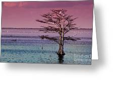 Cypress Purple Sky Greeting Card