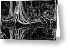 Cypress Roots - Bw Greeting Card