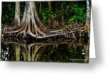 Cypress Roots Greeting Card
