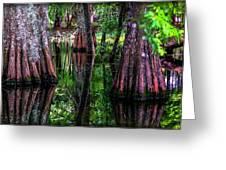 Cypress Secrets Greeting Card