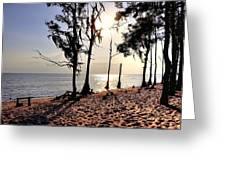 Cypress Shore Greeting Card