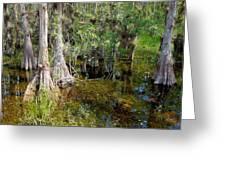 Cypress Trees 4021 Greeting Card