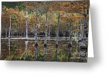 Cypress Tree Fall Reflections Greeting Card
