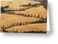 Cypress Tree Lined Road Greeting Card