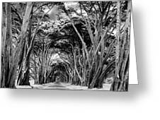 Cypress Tree Tunnel Point Reyes Greeting Card