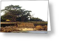Cypress Trees On 17 Mile Drive Greeting Card