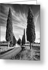 Cypress Trees - Tuscany Greeting Card