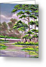Cypress Trees-wakulla River Florida Greeting Card