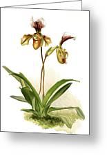 Cypripedium Hybridum Calypso, Sander Greeting Card