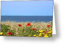 Cyprus Poppies Greeting Card