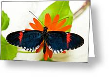Cythera Butterfly Greeting Card