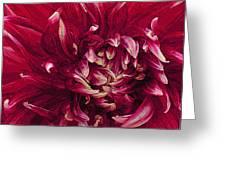 D Light Ful Dahlia Greeting Card