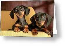 Dachshund Puppies Greeting Card