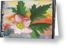 Texas Wildflowers Tp X Greeting Card