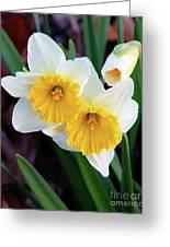 Daffodil Art  Greeting Card