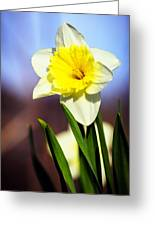 Daffodil Blossom Greeting Card