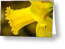 Daffodil Dewdrops Greeting Card