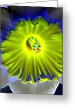 Daffodil Dreams - Photopower 1904 Greeting Card