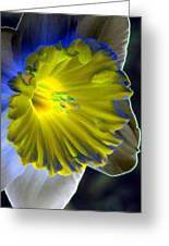 Daffodil Dreams - Photopower 1907 Greeting Card