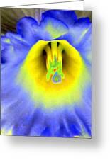 Daffodil Dreams - Photopower 1920 Greeting Card