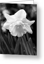 Daffodil Flower Black And White Greeting Card