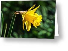 Daffodil - Impressions Greeting Card