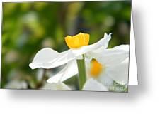 Daffodil In Profile Greeting Card