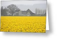 Daffodil Haze Greeting Card